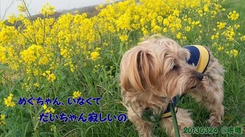 20134月寂しいだいちゃん.jpg
